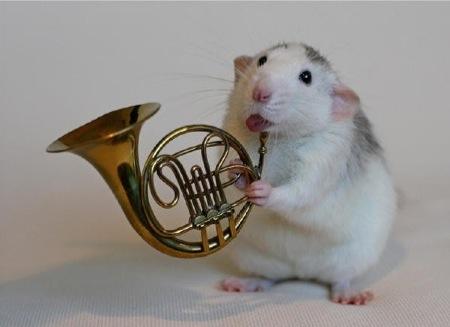 ratinho4