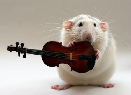 ratinho6