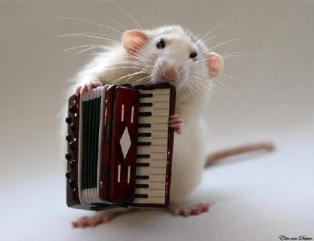 ratinho7