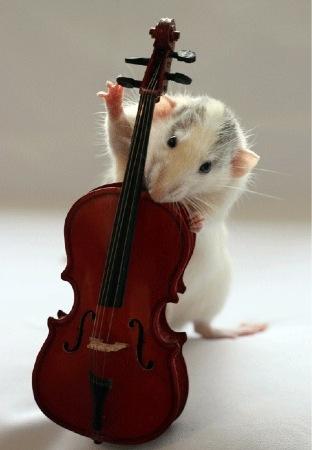 ratinho8