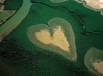heart_shaped_mangrove