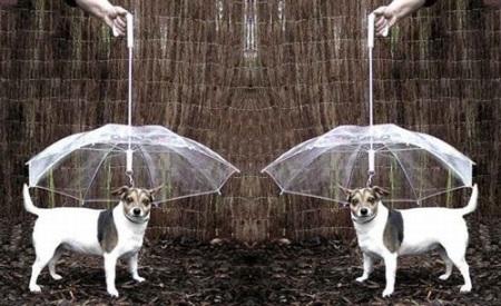 umbrella-for-pets