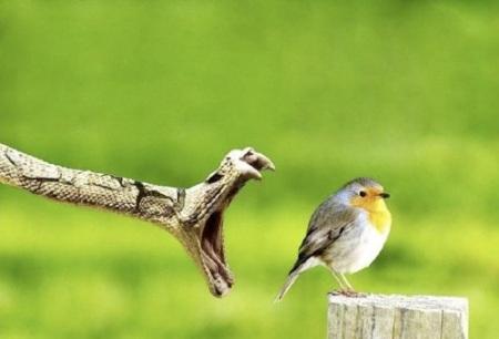Voe em alta velocidade, birdie!
