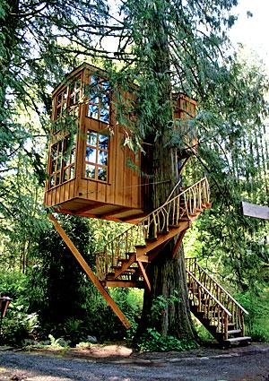 treehouses6