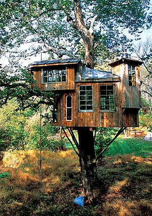 treehouses9