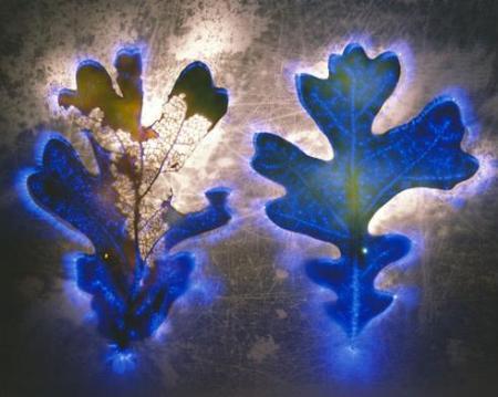 flores elétricas5